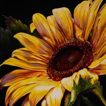Sun Kissed - By Canadian Artist Rena Bierman